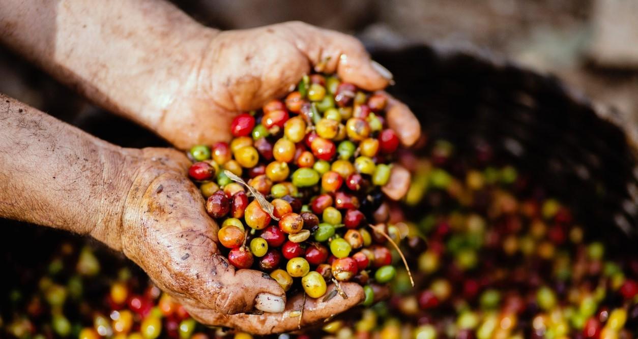 chia seeds green coffee